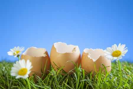 Easter Eggs in Grass with a Blue Background. photo