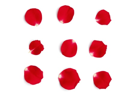 Set of multiple petals from a red rose, isolated on white background.