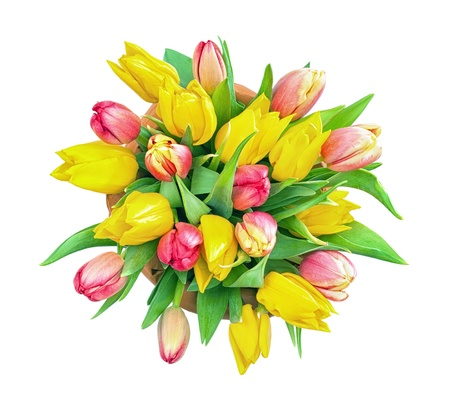 Isolated shot of a bunch of Red and Yellow Tulips  Top view photo
