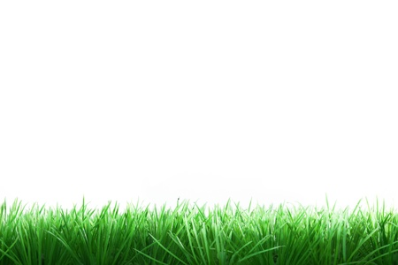 Border of green grass, isolated on white background.