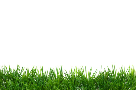 Easter Grass border, isolated on white, plane
