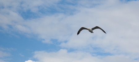 glide: Sea gull in front of cloudy sky, focus on eyes and motion blur on the wings, panoramic image