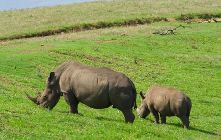 rinoceronte negro de África Foto de archivo - 3959308