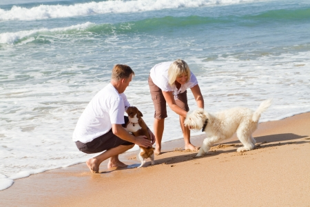 anniversary beach: couple playing with dogs on beach