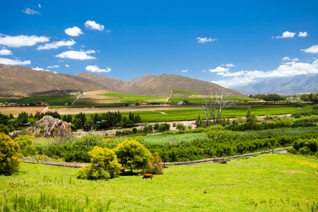 winelands scenery in Cape Town, South Africa photo