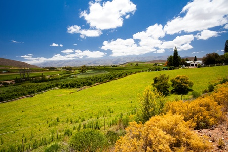 winelands landscape in Cape Town, South Africa photo