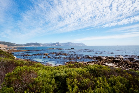 south african birds: Boulders Beach, Citt� del Capo, Sud Africa