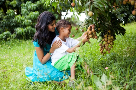 latin mother: young happy mother and son picking litchis in litchi orchard