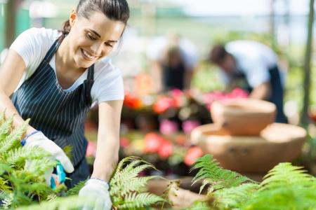 petites fleurs: belle p�pini�re ouvrier f�minin travaillant dans les serres Banque d'images