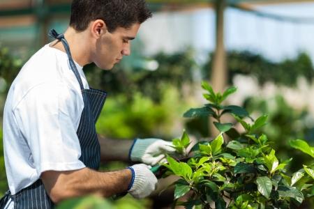 leaf cutter: male gardener working in garden