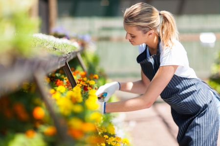 small flower: young female florist working in nursery