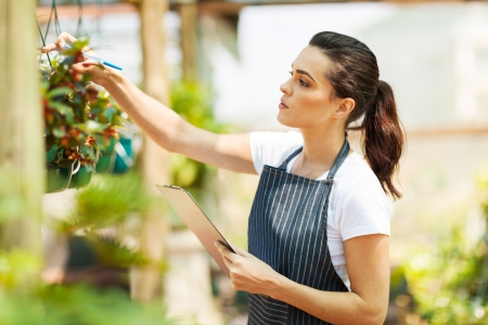 small plant: florist checking flowers condition in greenhouse Stock Photo