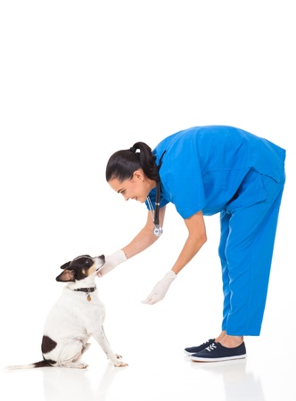 vet doctor playing with dog isolated on white background photo