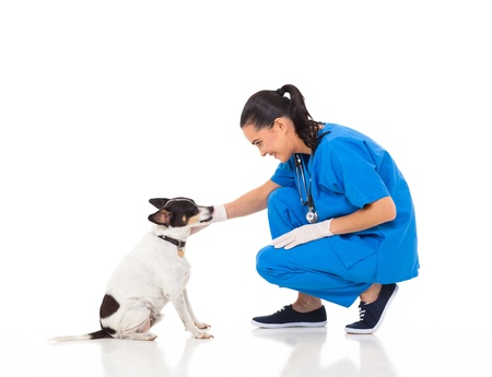 veterinarian female doctor playing with pet dog photo