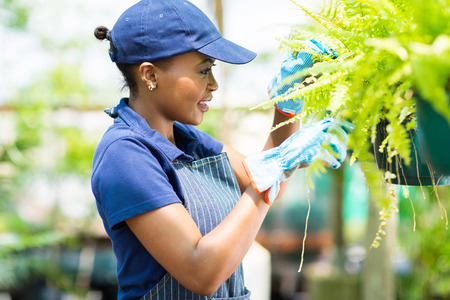 cute african female florist checking flowers condition in greenhouse photo