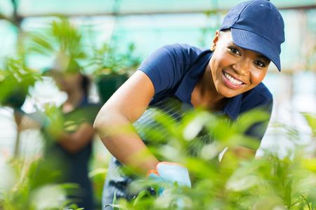 jardineros: joven educadora femenino africano que trabaja en el interior de efecto invernadero Foto de archivo