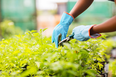 collarin: jardinero planta recorte en el jardín Foto de archivo
