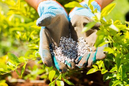 fertilizer: garden fertilizer on gardeners hand