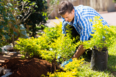 young man transplanting a new plant in his garden