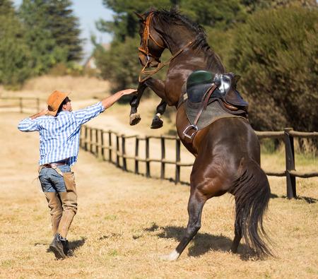 vaquero que intenta controlar su caballo Foto de archivo
