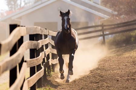 running horses: loosing horse running towards the camera