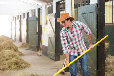 horse stable: cowboy working in a horse stable