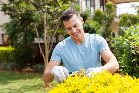 laboring: handsome young man pruning plant at home garden Stock Photo