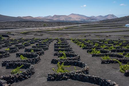 lanzarote: Vineyards in La Geria, Lanzarote