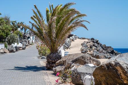 playa blanca: Palm trees on a shore line in Playa Blanca, Lanzarote Stock Photo