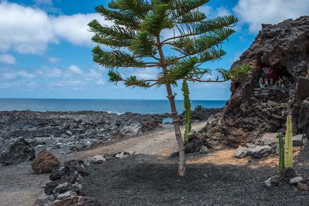 lanzarote: Tree in El Golfo, Lanzarote Stock Photo