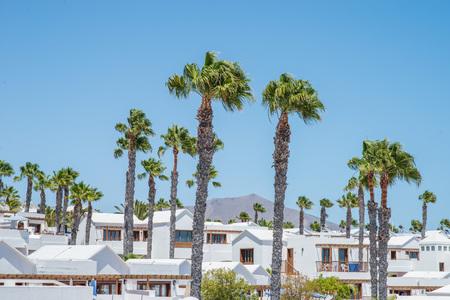 playa blanca: Palm trees in a white willage near Playa Blanca, Lanzarote