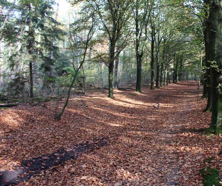 Forest path landscape in autumn, Utrechtse Heuvelrug in the Netherlands