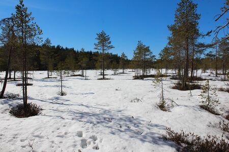 Overview Björnlandet National Park in Sweden Stockfoto