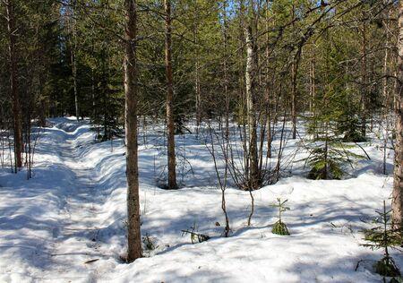 Overview Björnlandet National Park in Sweden