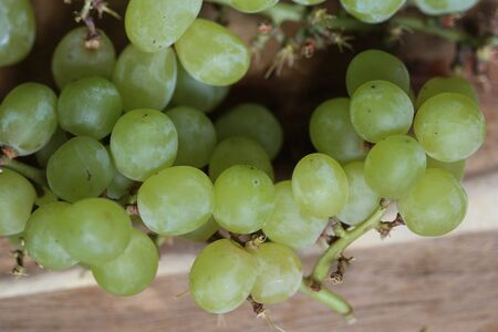 close up of fresh White grapes