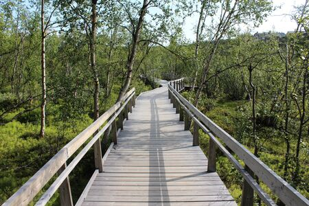 Overview of Hikers trail through forest in abisko national park, northern sweden