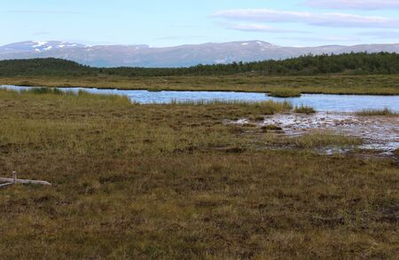 Overview of mountain wetland in arctic tundra in abisko national park, northern Sweden
