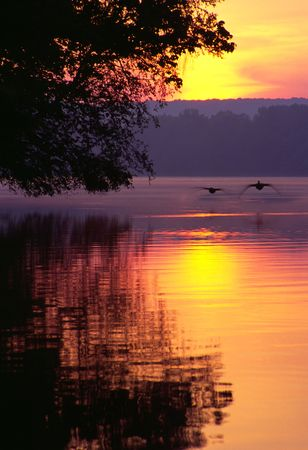 birds lake: A pair of silhouetted Canadian Geese coming in for a landing on a lake at sunrise. Stock Photo