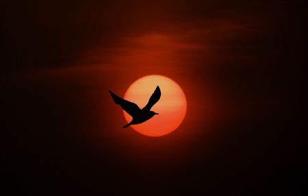 Birld silhouette against sun and clouds.