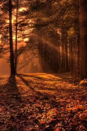 shafts: Shafts of morning sunlight filtering through the forest branches in Autumn.