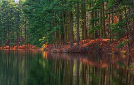 Autumn Pines reflecting in a forest lake.