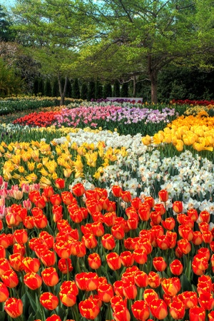 A colorful Botanical Tulip Garden in spring. Stock Photo