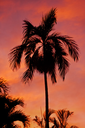 Palm Tree Silhouette At Sunset Stock Photo