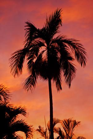 Palm Tree Silhouette At Sunset Stok Fotoğraf