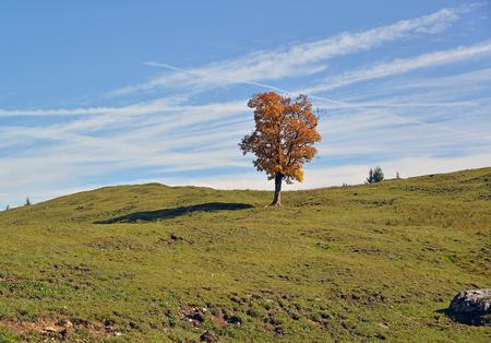 Tree in the Alps Stock Photo