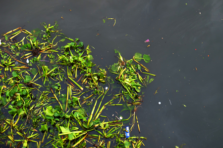Top view of common water hyacinth floating on the surface of dirty river with plastic garbage from human