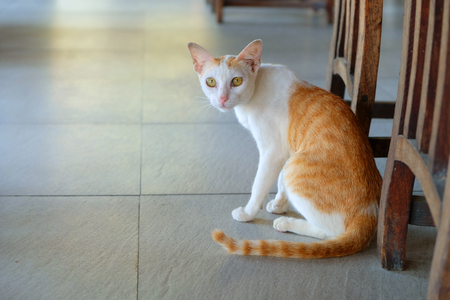 White and orange cat sitting on the tile floor beside the wood chair
