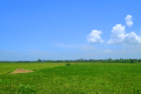 Wide bright beautiful green field on cloudy blue sky day in upcountry