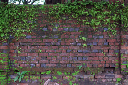 Old wet brick house wall covered by green climbing plants Foto de archivo