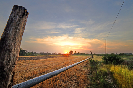 Sunset landscape view of dry wild grass field in rural area